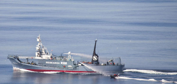 Japanese whalers, activists clash off Antarctica