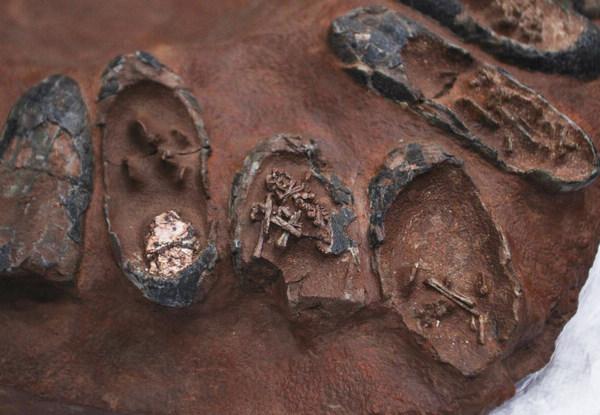 کشف پنج تخم سالم دایناسور