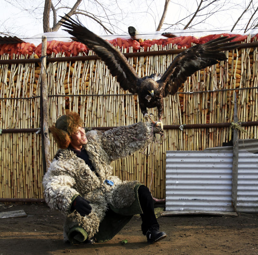 Manchu people find hunting partner in eagles[5]- Chinadaily
