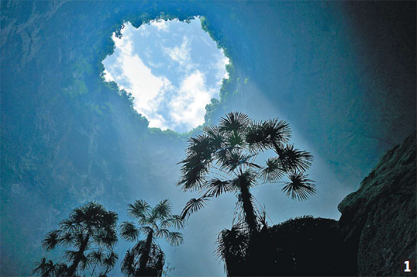 1 A Palm Tree Sits On A Ridge In The Sinkhole In Xuanen